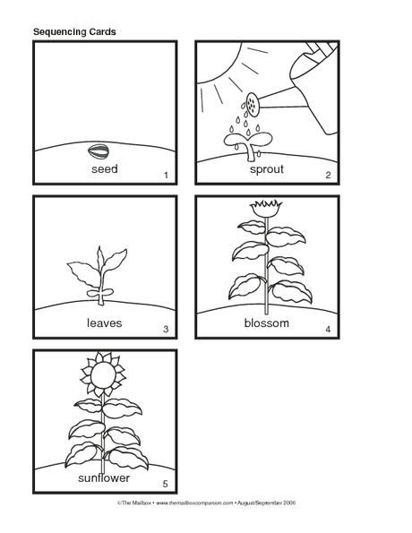 Sunflower Sequencing Booklet, Lesson Plans - The Mailbox