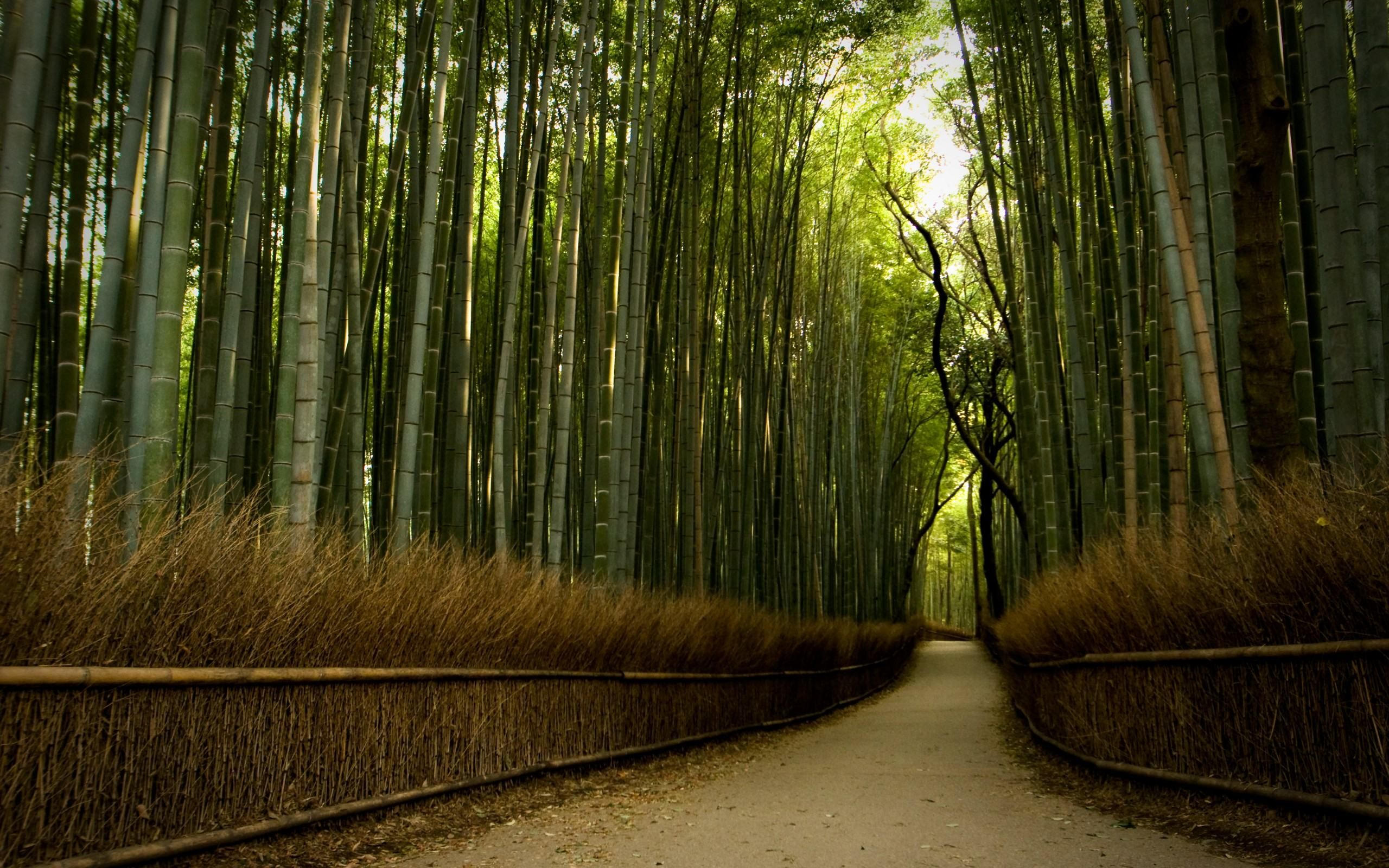Beautiful Path In Bamboo Forest 2560 1600 Forest Wallpaper