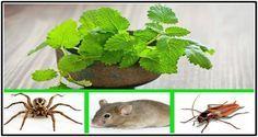 Si en tu casa tienes esta planta, nunca más tendrás ratones, arañas u otros insectos.