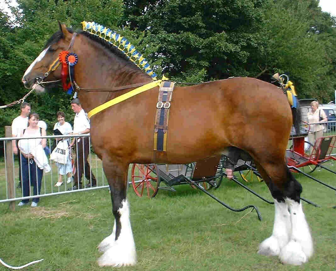 Ox Kill Farm - Shire Horses