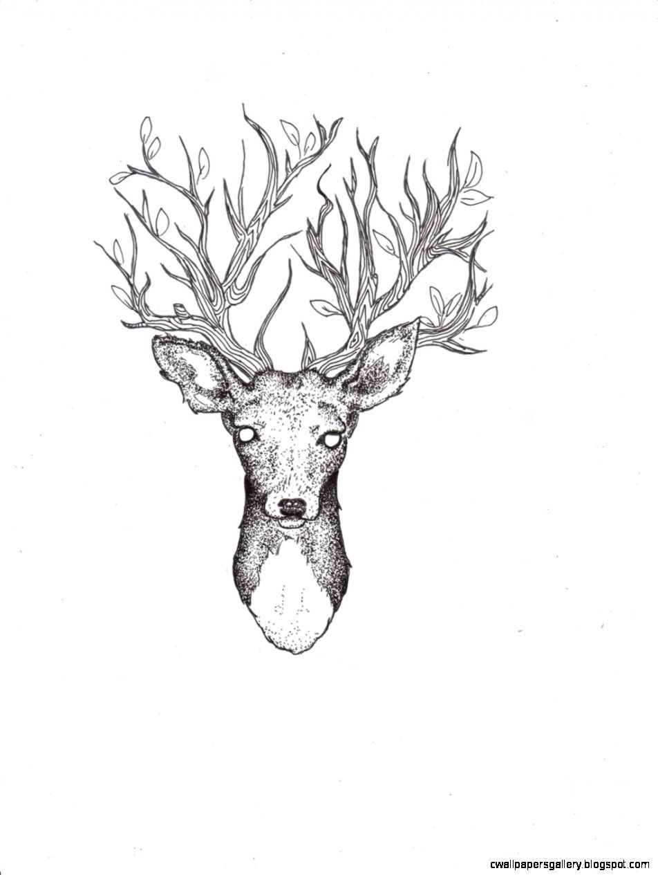 deer drawing tumblr amazing wallpapers | art and culture