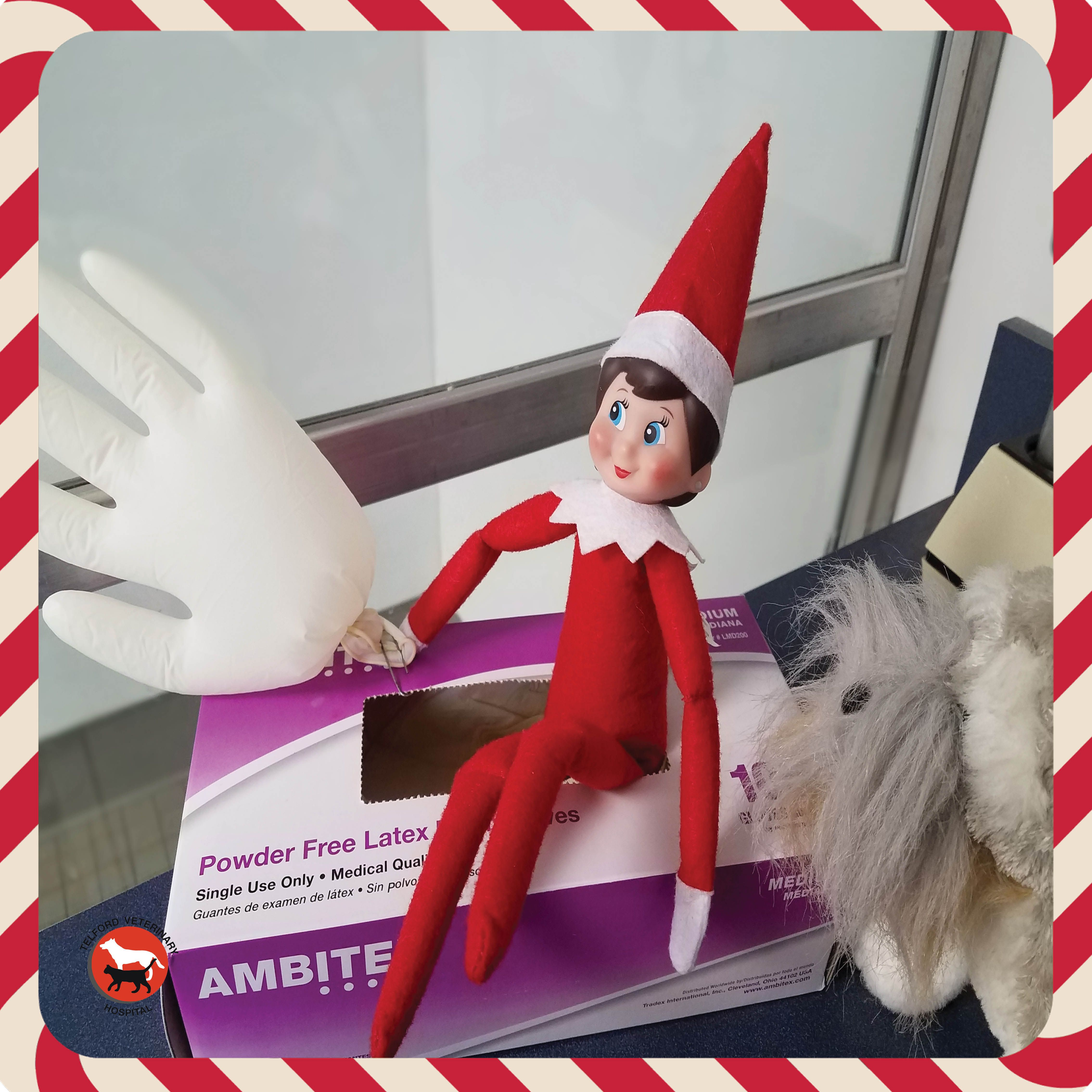 Ella And Stanley Wanted To Give The Vet A Hand Today Elf On The Self Christmas Elf Elf On The Shelf