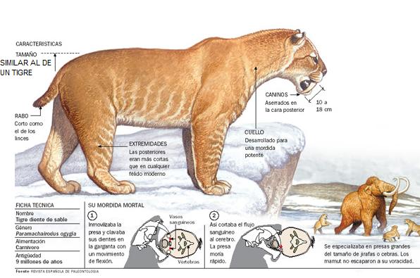 Tigre Dientes De Sable Prehistoric Animals Prehistoric Stone Age Animals