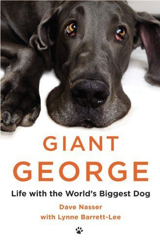 """With his big blue eyes and soulful expression, George was the irresistible runt of the litter. But Dave and Christie Nasser's """"baby"""" ended up being almost five feet tall, seven feet long, and 245 pounds. Eager to play, and boisterous to the point of causing chaos, this big Great Dane was scared of water, scared of dogs a fraction of his size and, most of all, scared of being alone."""
