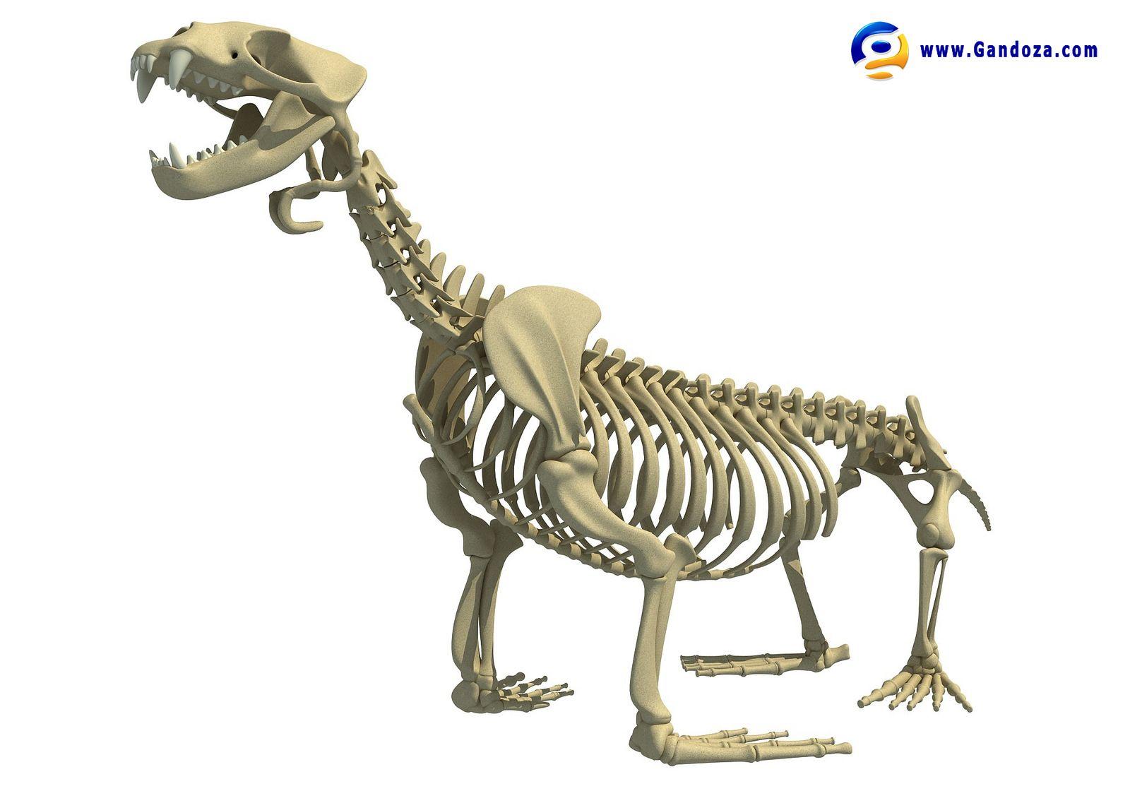 Sea Lion Skeleton Skeletons Lions And 3d