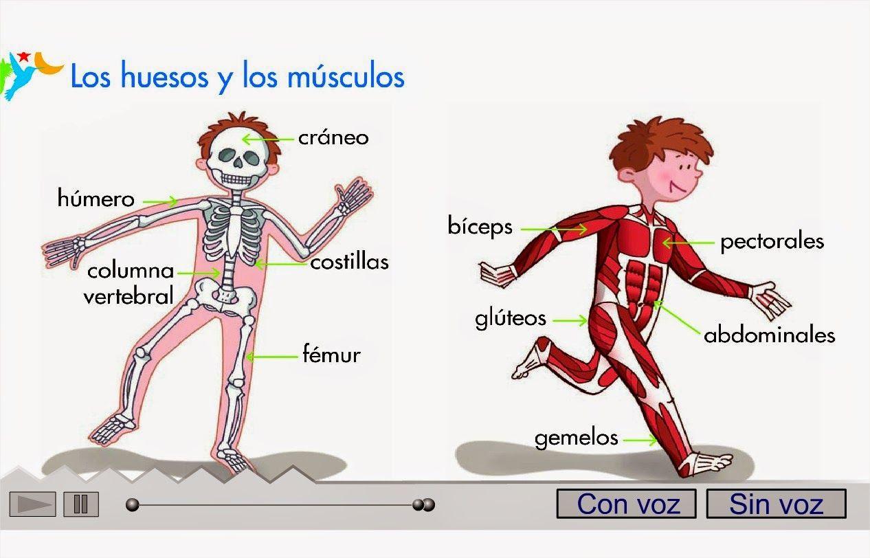 Cancion huesos http://primerodecarlos.com/SEGUNDO_PRIMARIA ...