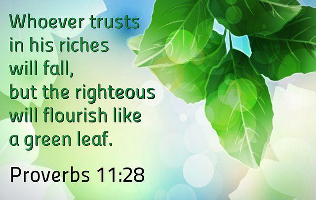 Proverbs 11:28 | Proverbs 11, Proverbs, Bible proverbs
