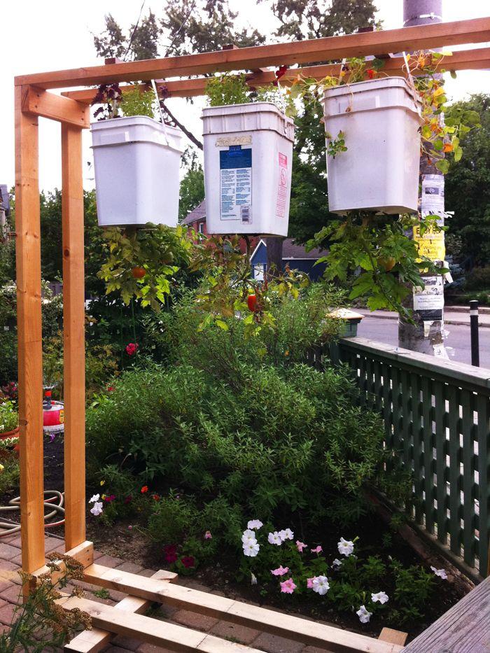 Upside Down Tomato Planters Hanging Tomato Plants 400 x 300