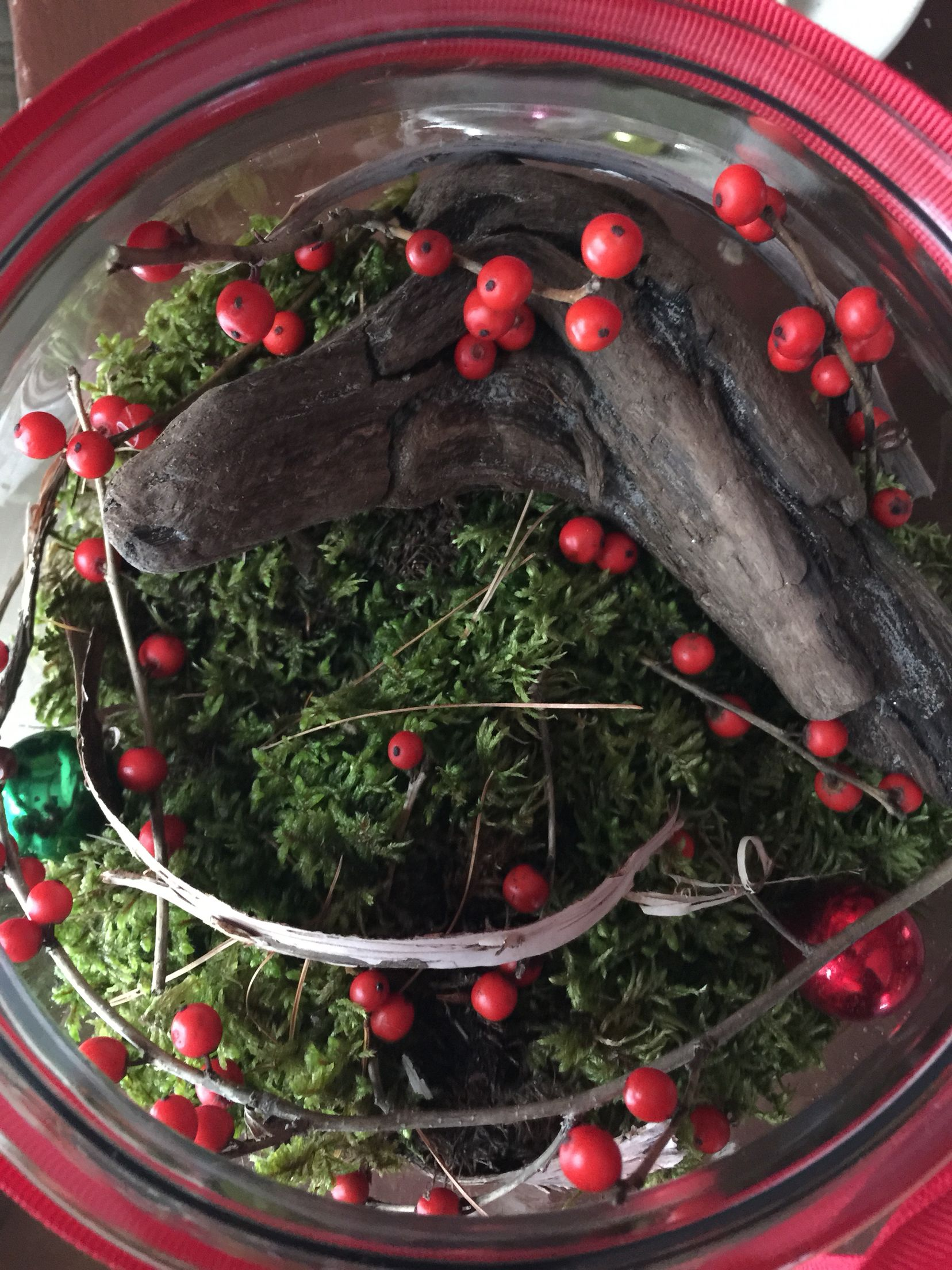 great hostess gift...fish bowl layered with tiny stones, sand, fresh moss etc. festive & fun!