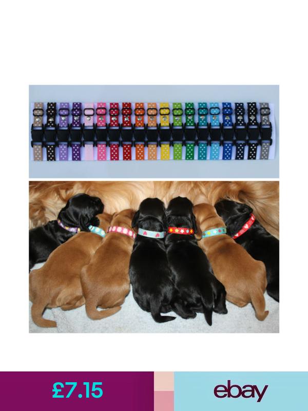Puppyidcollars Whelping Supplies Ebay Pet Supplies Puppies