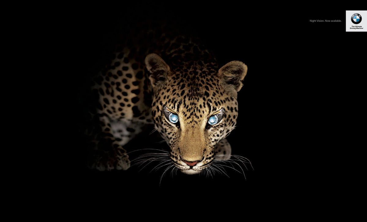 11+ Animals with night vision ideas in 2021