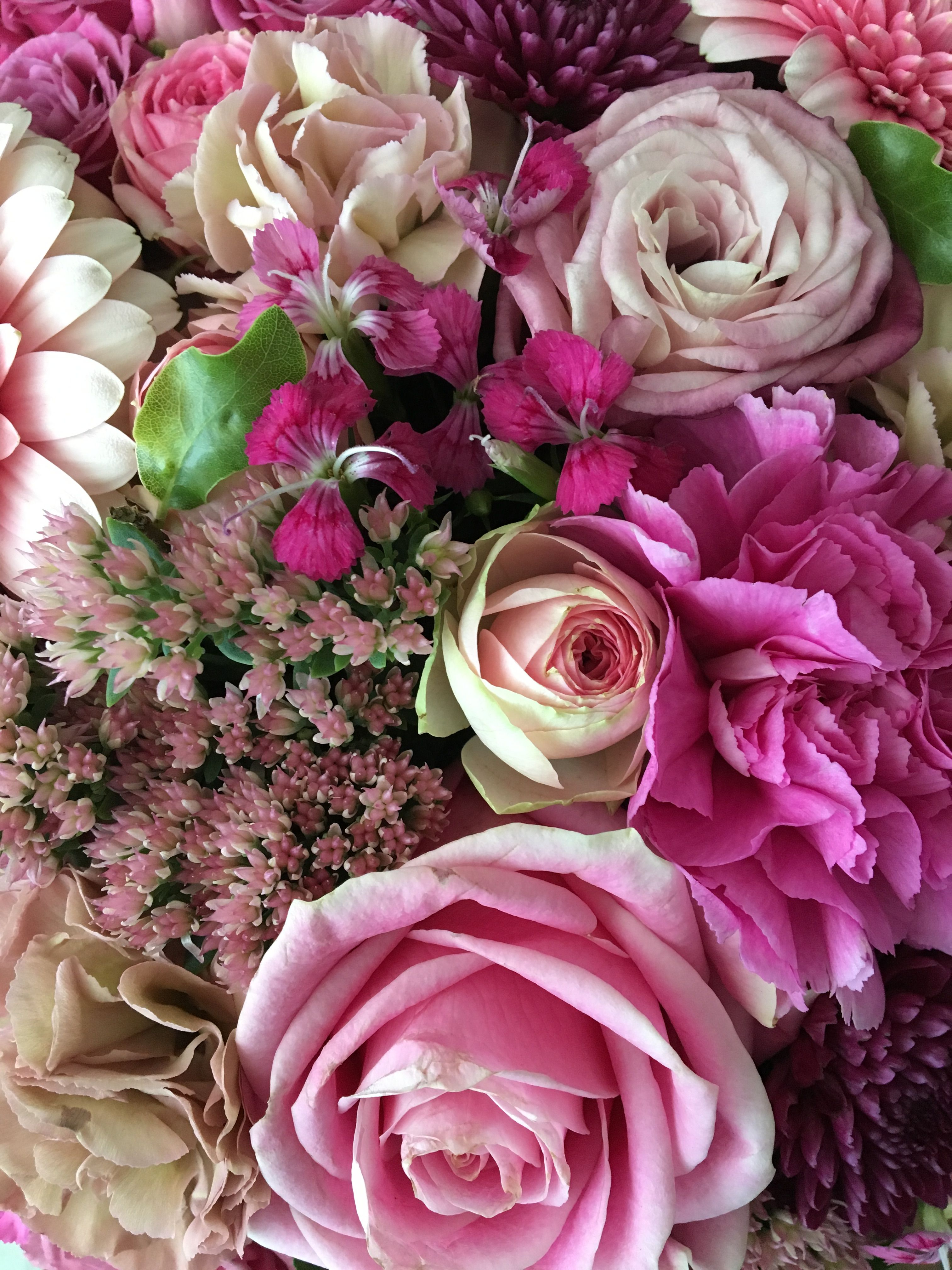 Pin By Carla On Fiori Pinterest Beautiful Flowers Flowers And