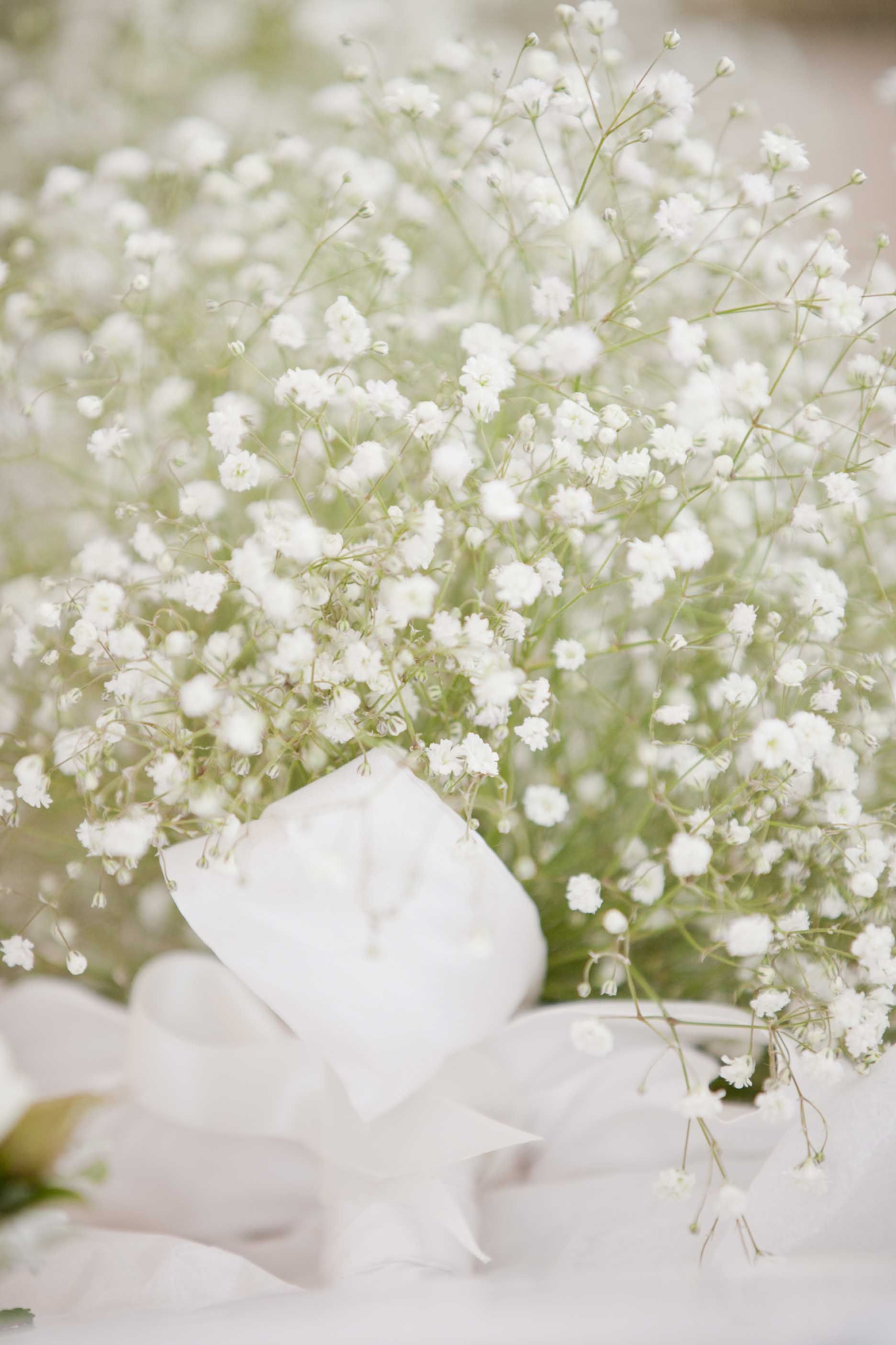 Gypsophlia Babies Breath Bouquet Woodstock Florist Www Woodstock Co Nz Babys Breath Bouquet Babys Breath Wedding Bouquets