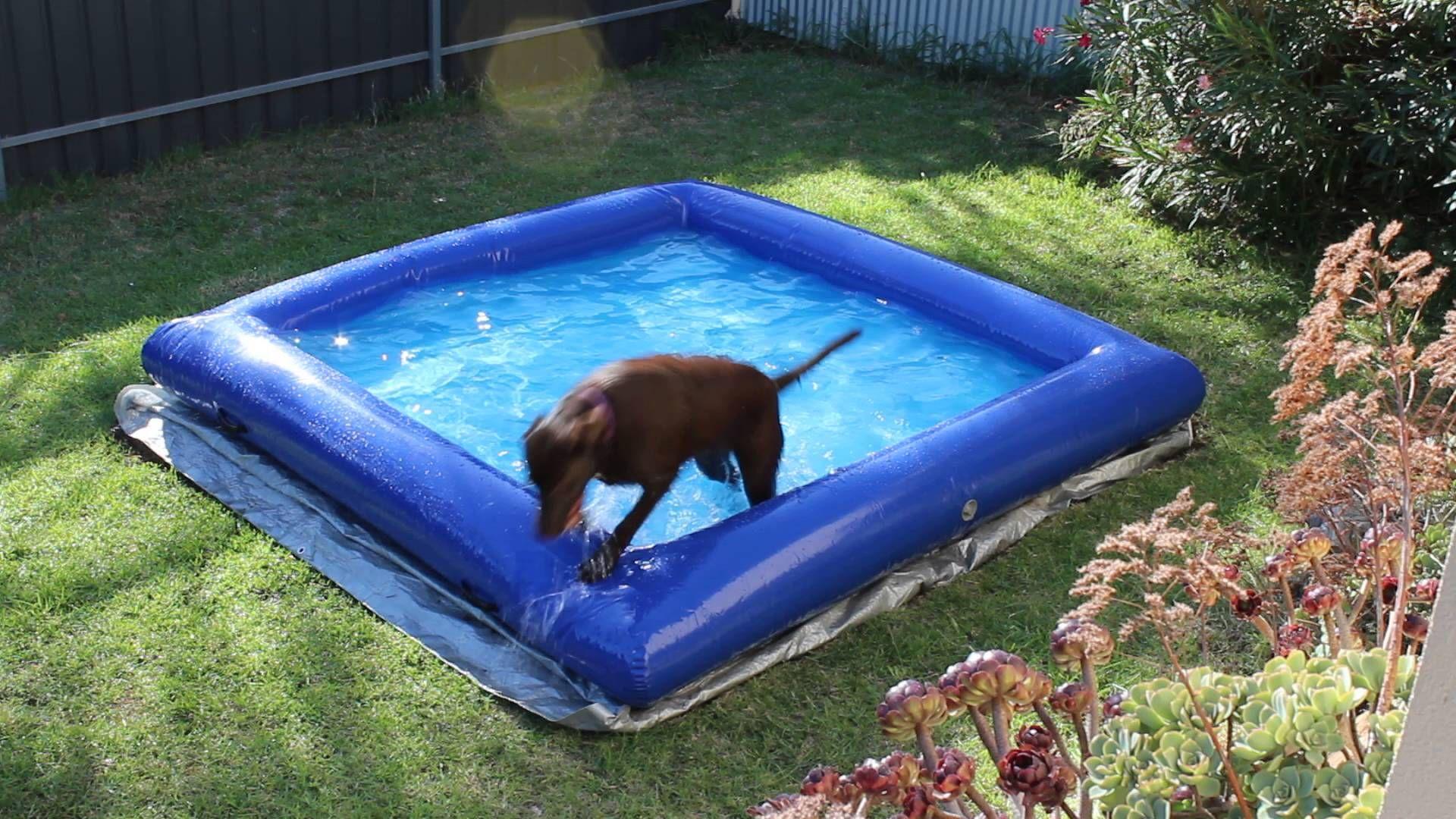 Dog Pool Large Indestructible Inflatable Dog Pool Dog Pool Dog Playground Petsmart Dog