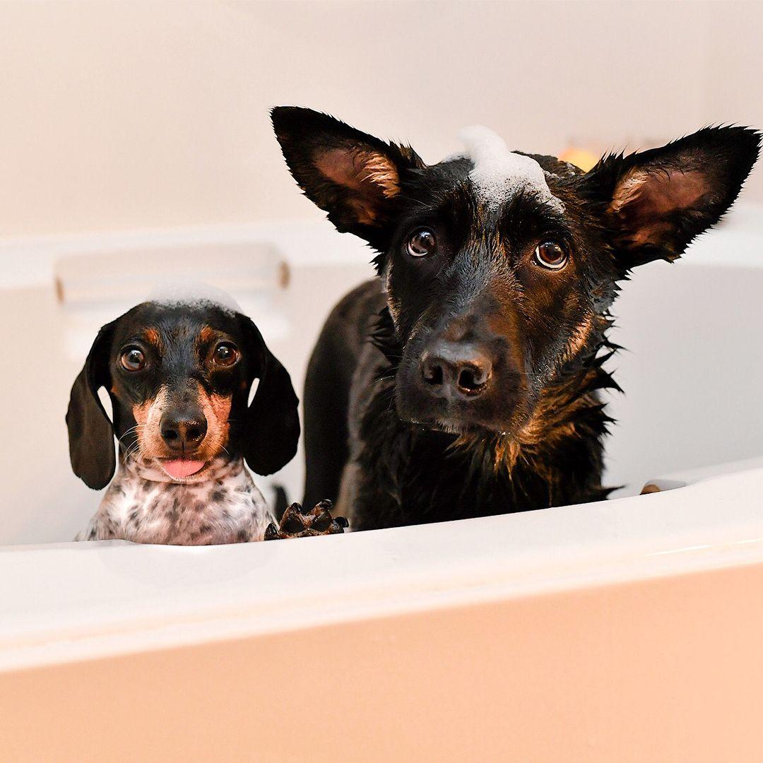 Rub A Dub Dog Squee Weenie Dogs Animals Dog Stories