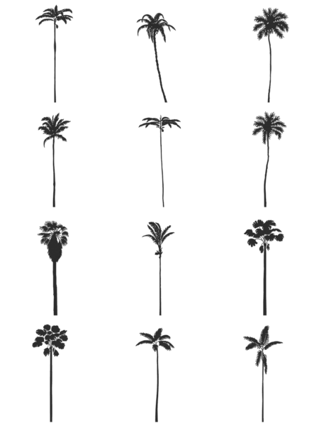 I V Dwg Vectorial Trees Palm Trees Pack Palm Tree Drawing Palm Tree Sketch Tree Drawing Simple