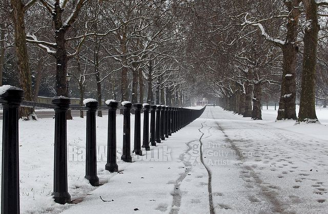 Shot taken in the snow at Constitution Hill in London looking back down london towards Hyde Park Corner. An avenue of trees lines the way into the distance.