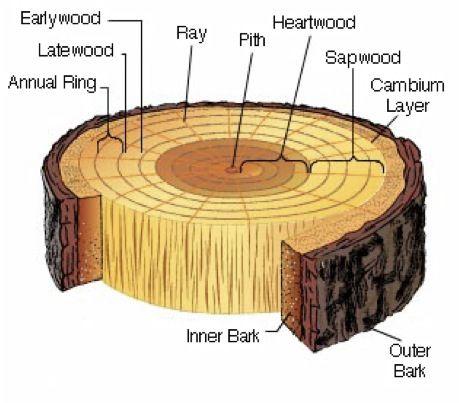 STEM Club: Parts of a Tree