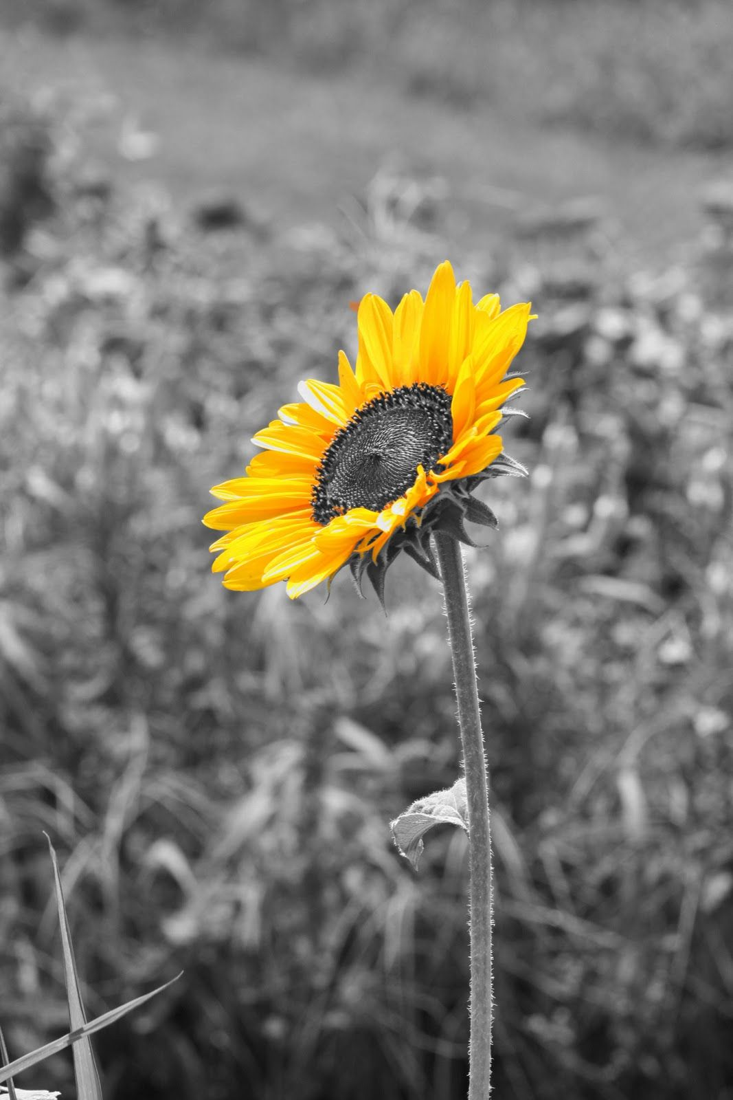 black and white nature photography with color accents