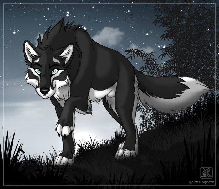 My Name Is Rain I Will Do Anything To Protect My Pack And Friends