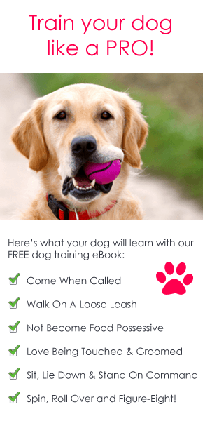 Puppy Training Tips Pascale Lemay Lemay Lemay De Groof Puppy Training Tips Puppy Training Dog Training