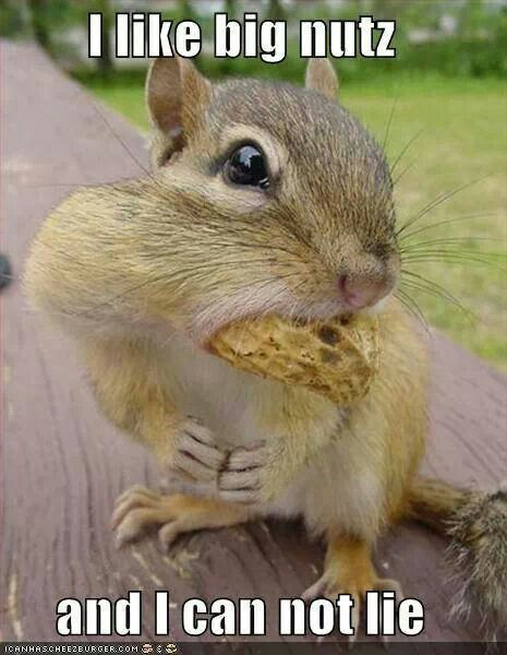 Deez Nuts In Yo Mouth Funny Squirrel Pictures Squirrel Funny Cute Animals