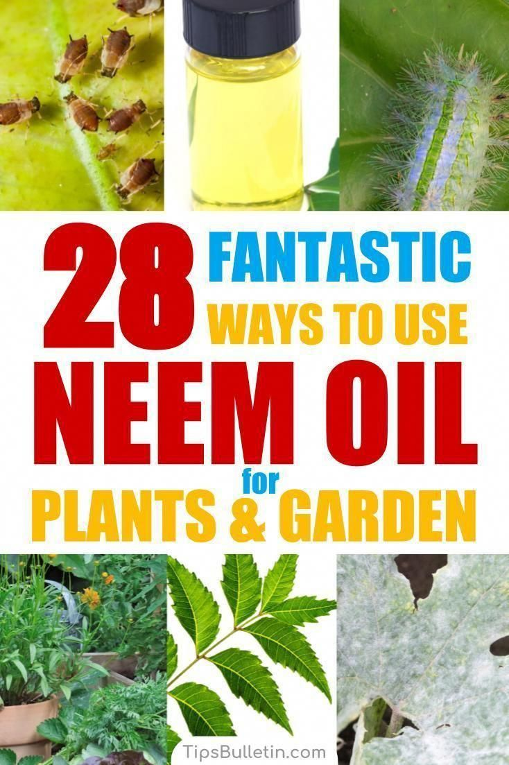 28 ways to use neem oil for plants - including tips and ...