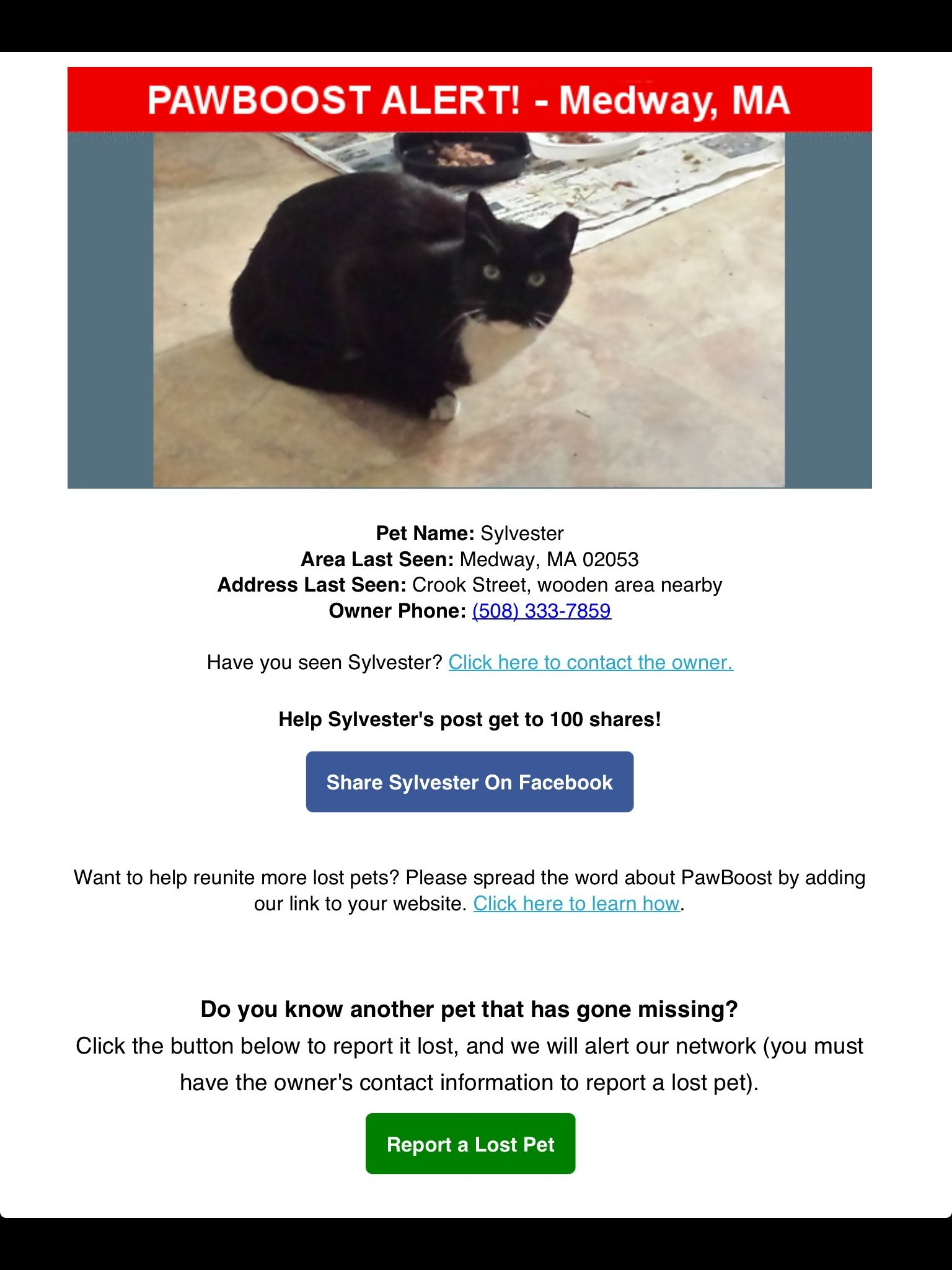 Lost Cat Named Sylvester Medway Ma Losing A Pet Pet Names