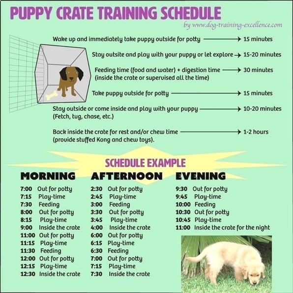 Tops In Dog Training Kennel Dog Training 101 Duet Basic Dog