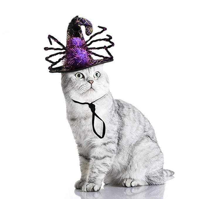 Enjoying Dog Spider Hat Cat Halloween Costume