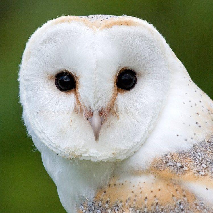 High Altitude Norwich >> About Us | Owl sanctuary, Mammals, Owl