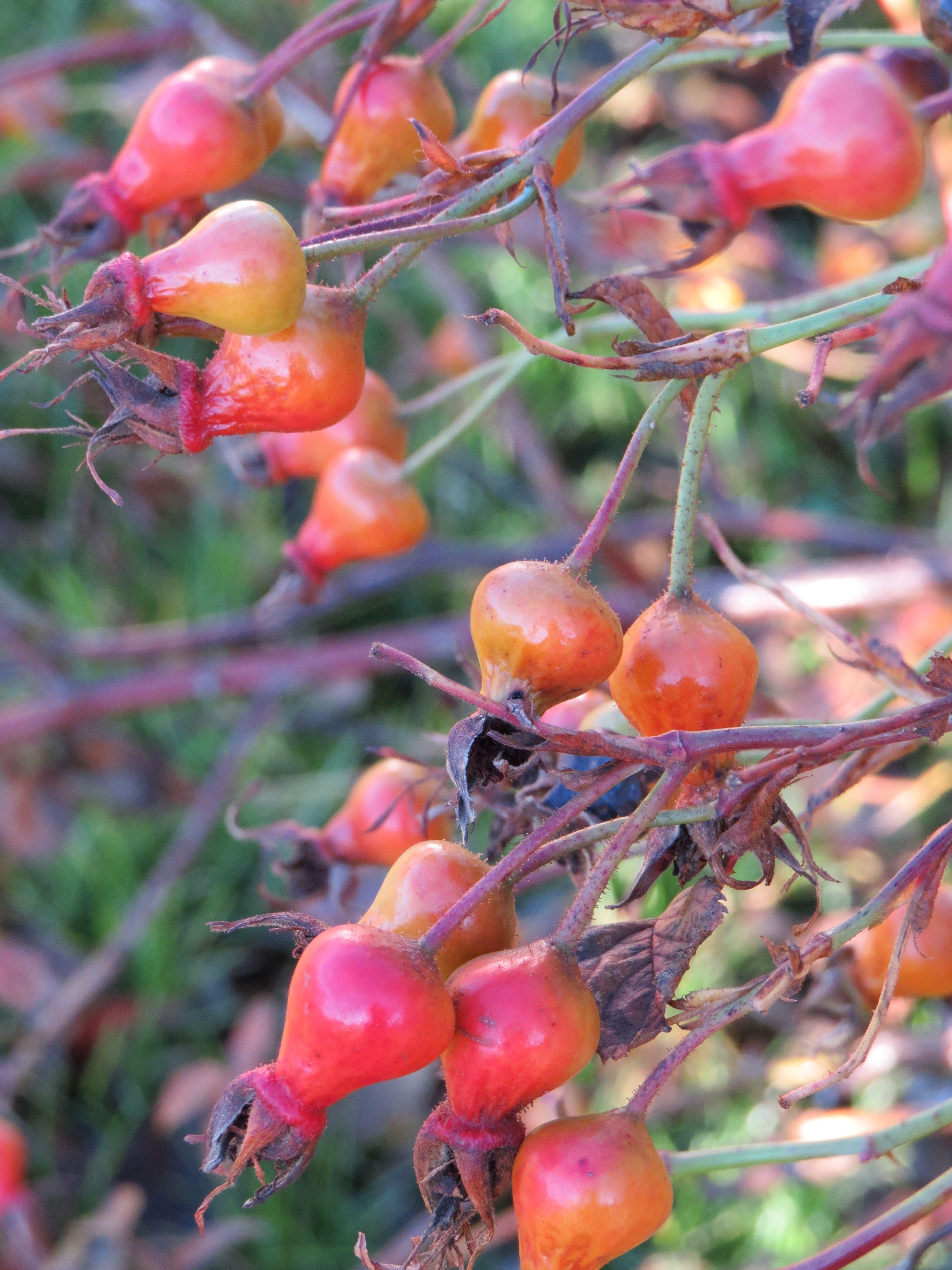 Kirsikka Hedelmä