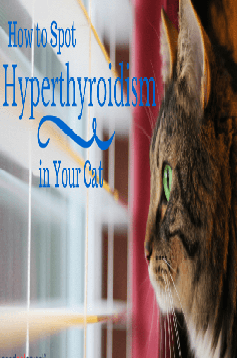 Hyperthyroidism in Cats Cats, Cat health care, Cat health