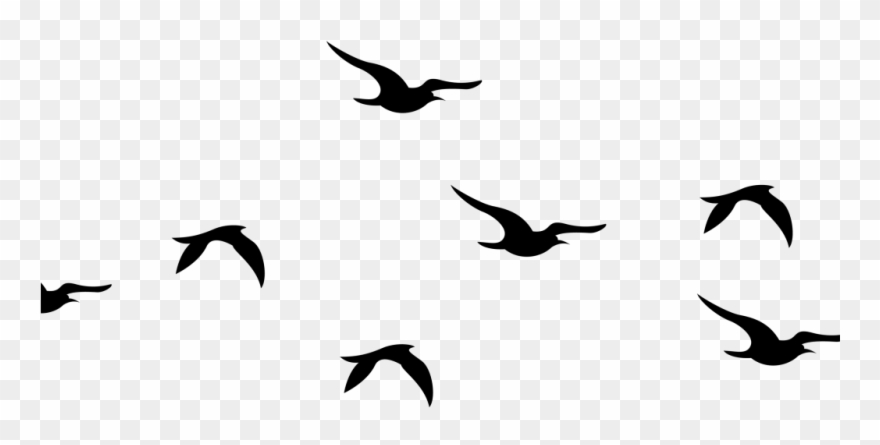 Flying Birds Silhouette Png Clipart 4210104 Pinclipart Flying Bird Silhouette Bird Silhouette Bird Silhouette Art