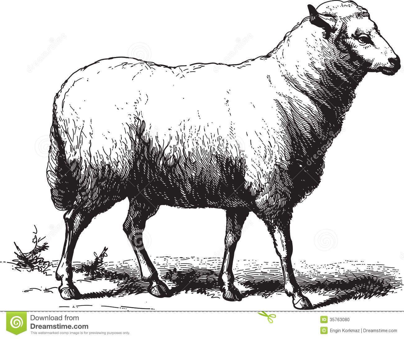 Sheep Stock Illustrations, Vectors, & Clipart – (15,547 ...