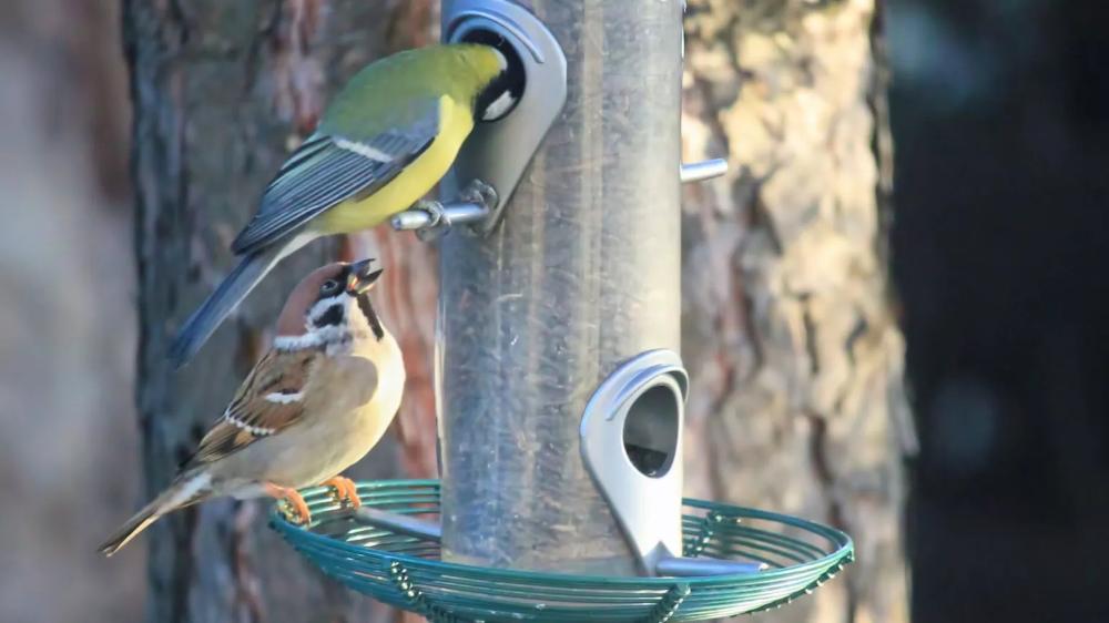 Futtersaule Futtersilo Fur Vogel Aufstellen Pflege Was Beachten Vogel Im Garten Vogelfutterstation Grosser Vogel
