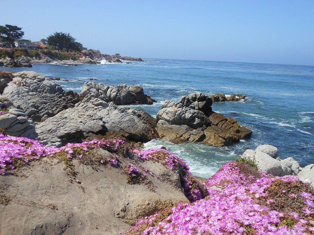 b16a09245c5d33c5a67054779571f9a2 - Pacific Grove Marine Gardens State Marine