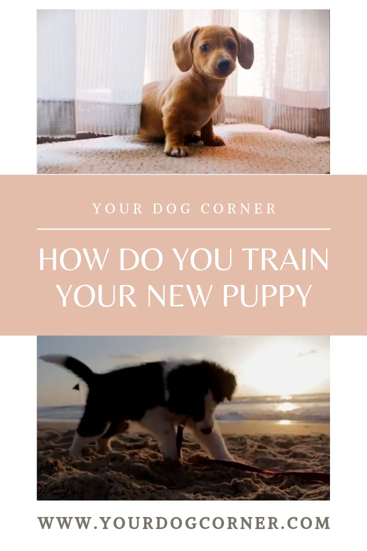 How Do You Train Your New Puppy