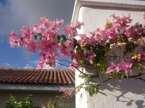 Tenerife via Hiddenblossom.com
