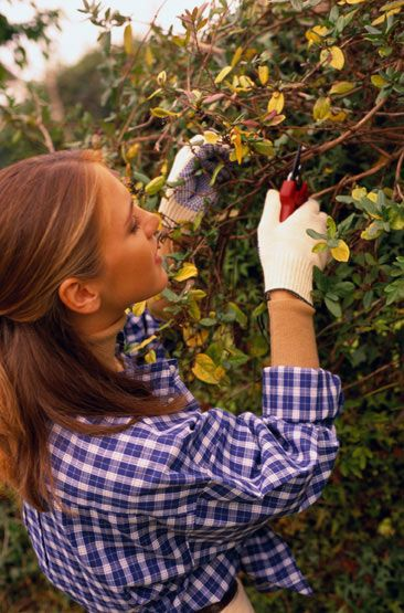 Now Is the Time to Prune Your Trees If you prune small trees now, you will be happy you did come spring! http://www.familytime.com/showarticle.aspx?articleid=455