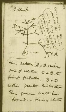 Los manuscritos de Darwin, en la red | RTVE.es