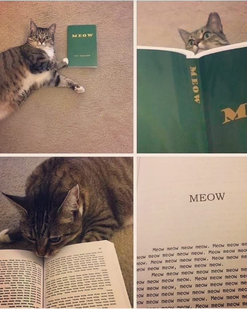 Cats Cats Cat Catsmemes Kittens Cute Funny Animals Memes Bookstagram Books Meow Animalslove Animalsmemes Funny Cat Pictures Cat Pics Cats