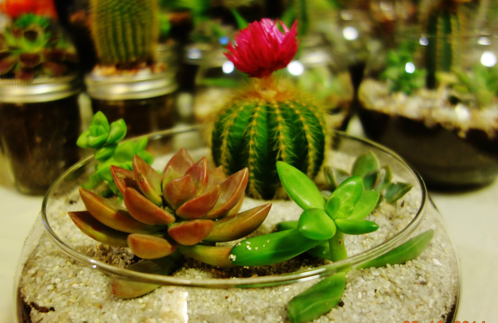 Beautiful terrarium