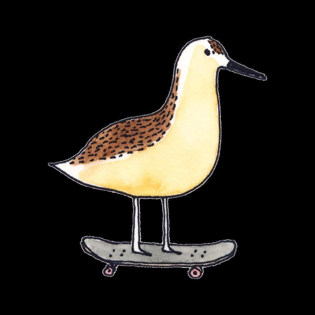 Henna Tattoo Galveston Tx: Skateboarding Sandpiper In 2019