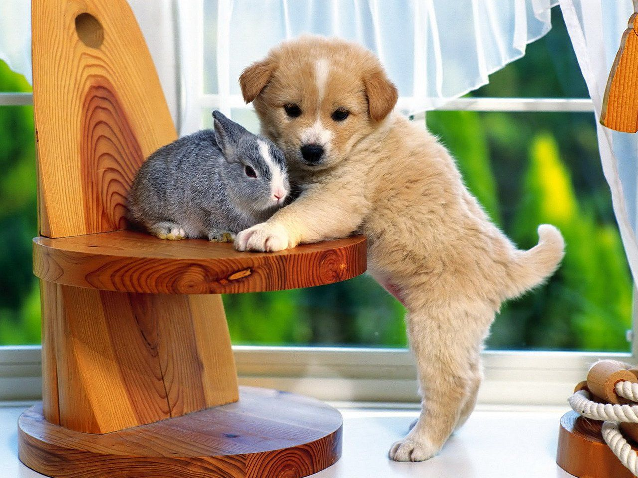 Cute Bunny And Puppy Wallpaper for Android Android Live