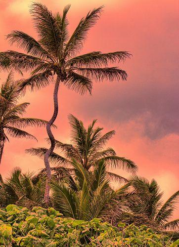 Crooked Palm, Turtle Bay, Oahu, Hawaii