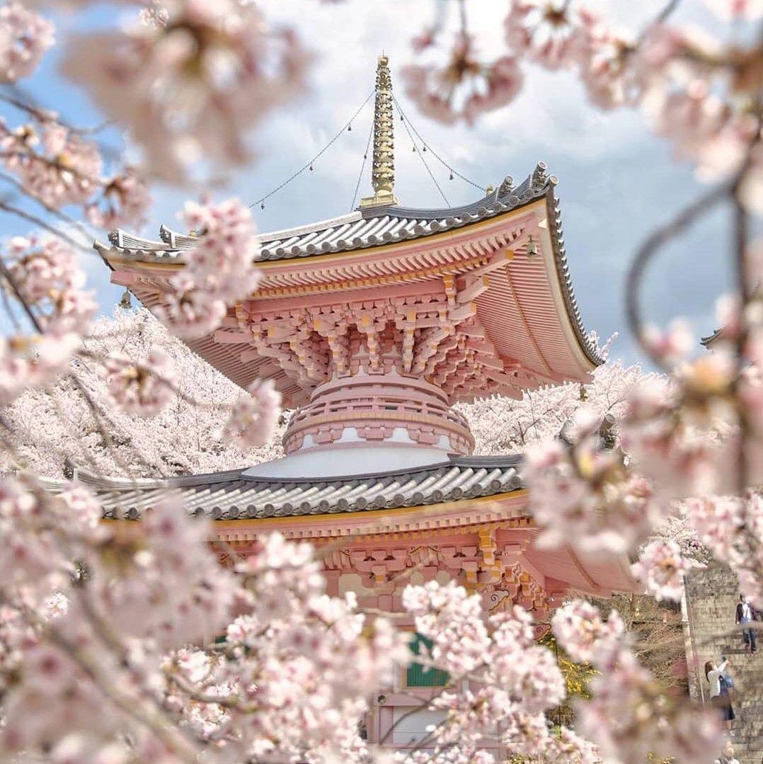 Cherry Blossoms Korea 2021 A Forecast Guide Where To Go South Korea Travel Korea Travel South America Travel