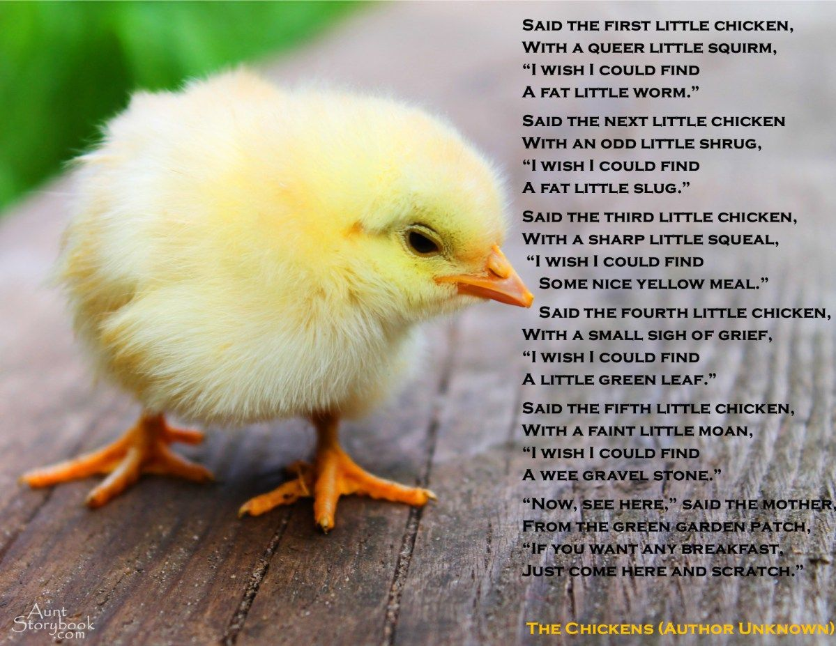 Famous Quotes About Chickens: The Chickens (Children's Poem)