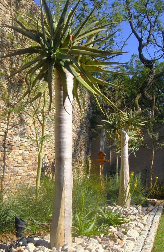 Ingenious Indigenous Evas Garden Design Dry Garden Design