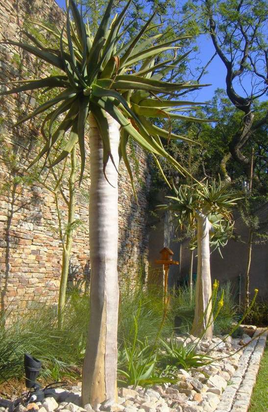 Ingenious Indigenous   Evas Garden Design   Dry garden ...